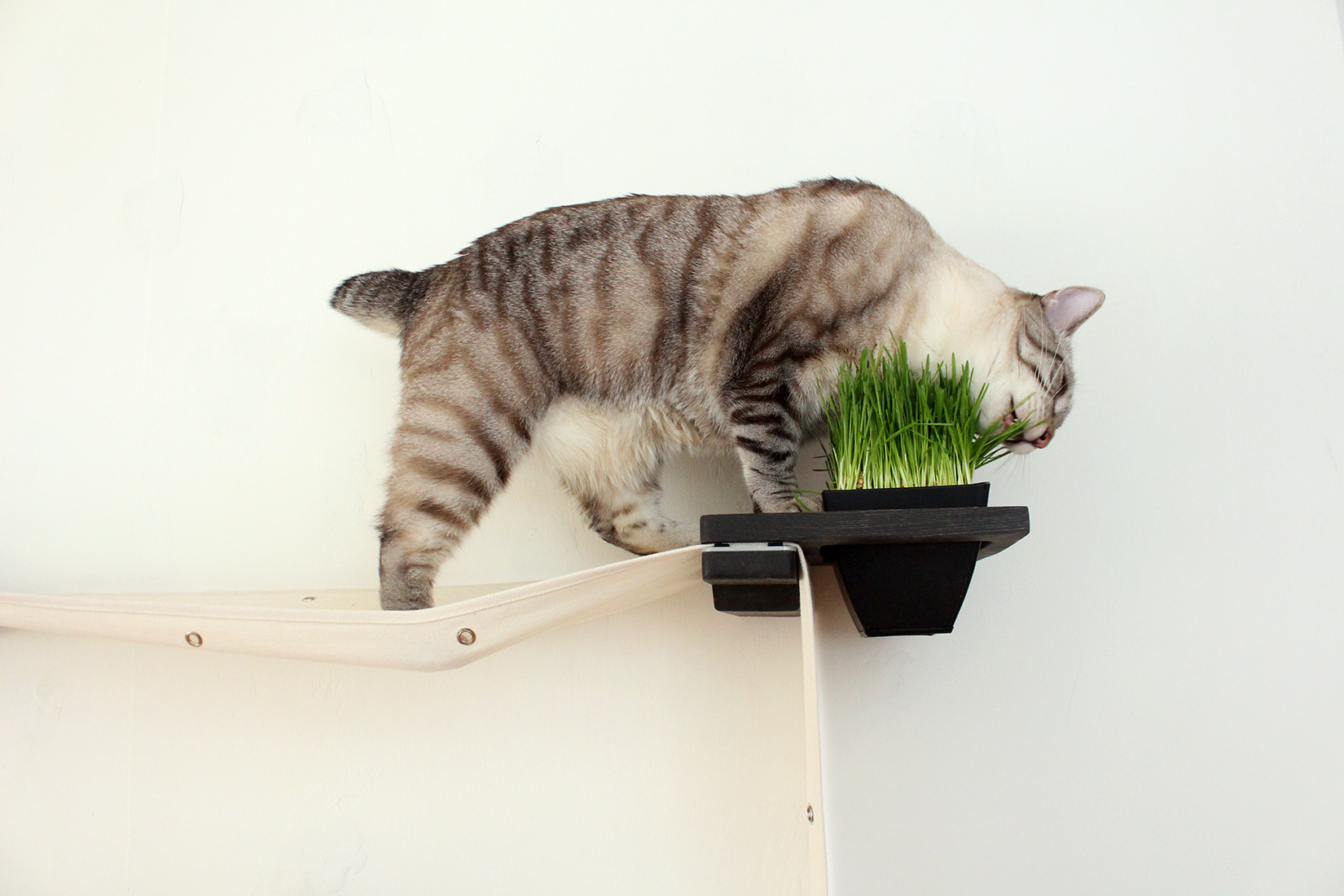 The Cat Mod - Planter ⋆ Catastrophic Creations