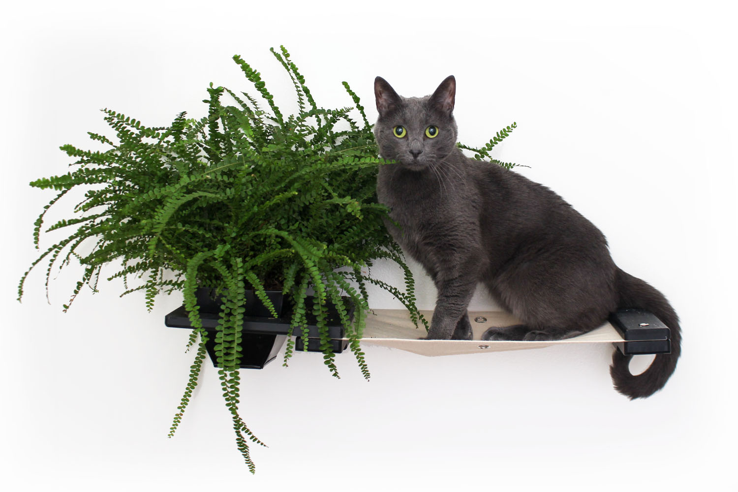 This photo displays a cat sitting on the hammock of the Planter Lounge. This image shows the Planter Lounge in Onyx, a black stain, with Natural fabric, a light tan color.