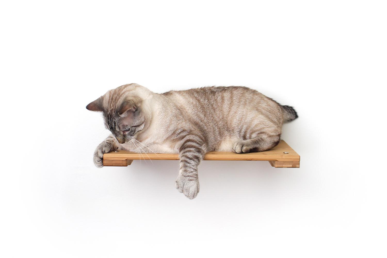 cat laying on wall mounted cat shelf