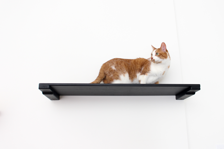 cat on wall mounted cat shelf