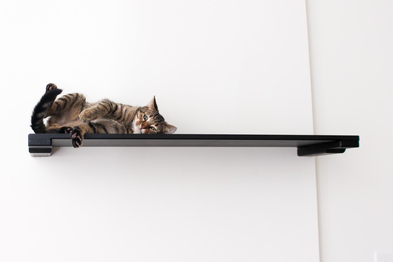 very cute kitten laying on wall mounted cat shelf