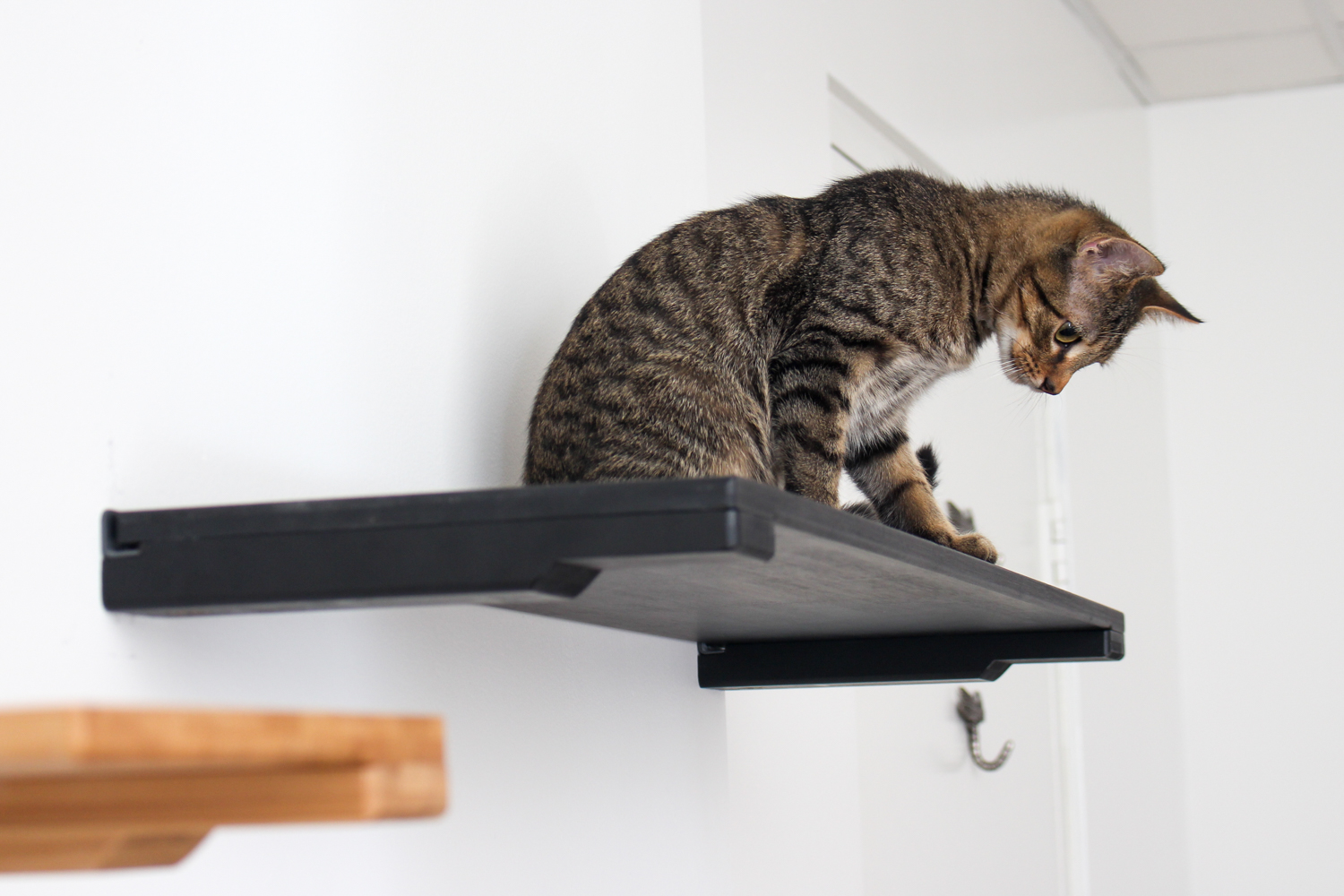 A cat sitting on a 34-Inch Solid Shelf in Onyx, a black stain.