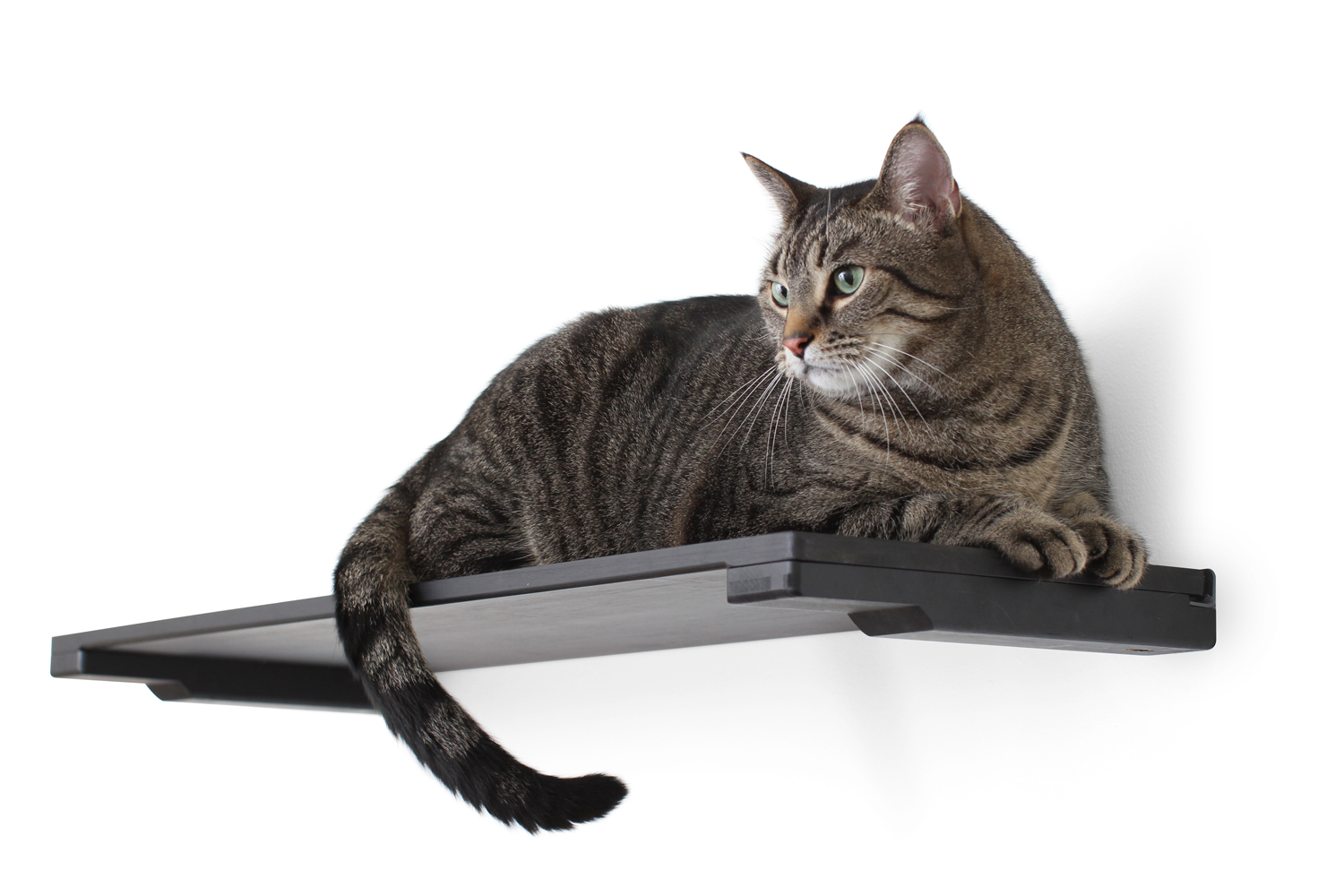 A cat laying on a 34-Inch Solid Shelf in Onyx, a black stain.