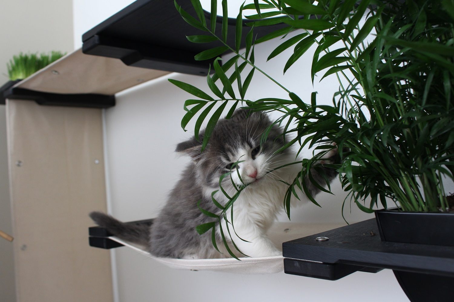 This photo displays a cat sitting on a hammock of the Mini Garden Cat Condo.