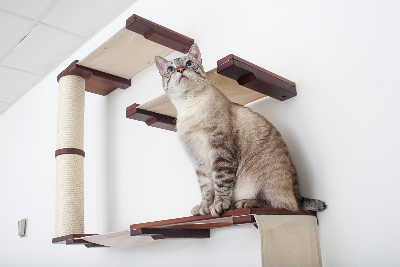 kitten sitting on wall mounted cat furniture