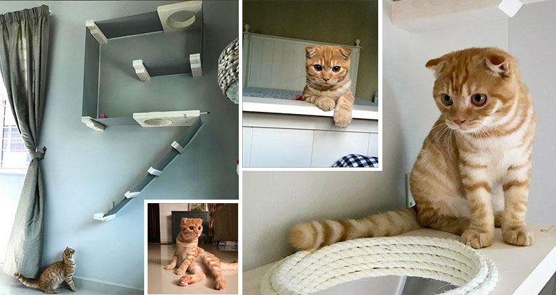 photo collage of kitten interacting with wall mounted cat furniture