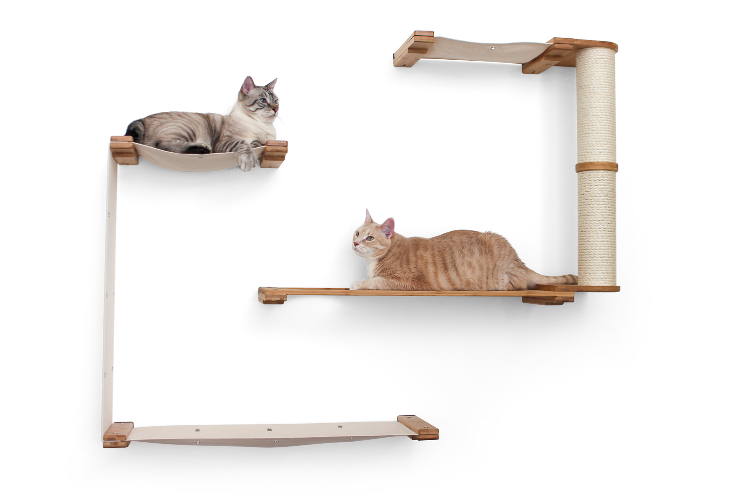 two cats hanging out on wall mounted cat complex