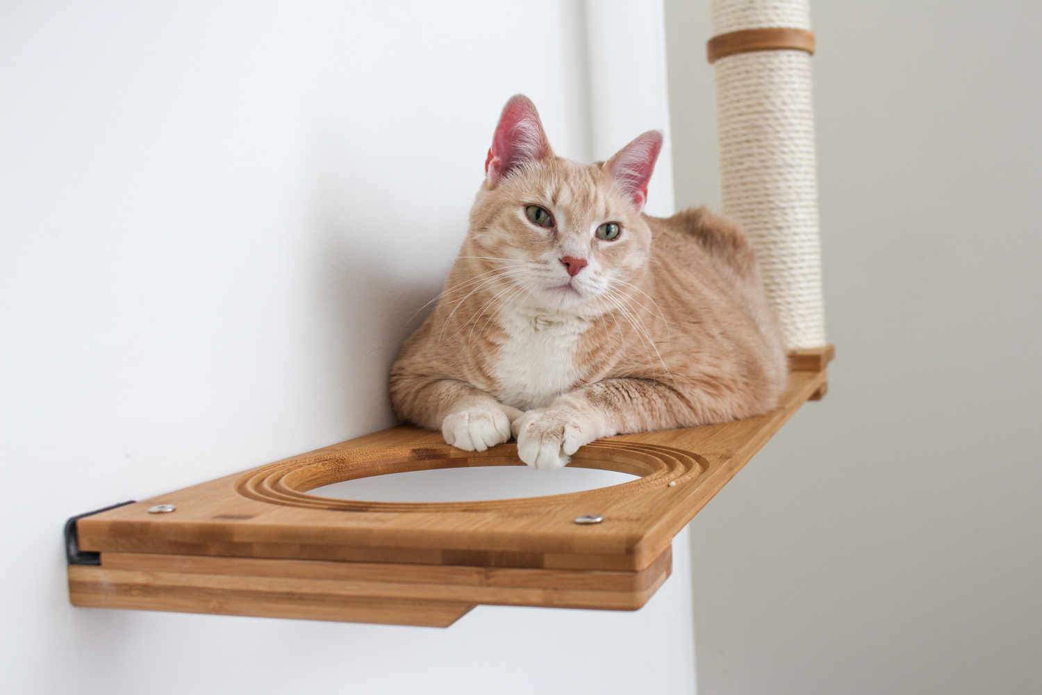 cat hanging around escape hatch of wall mounted cat furniture