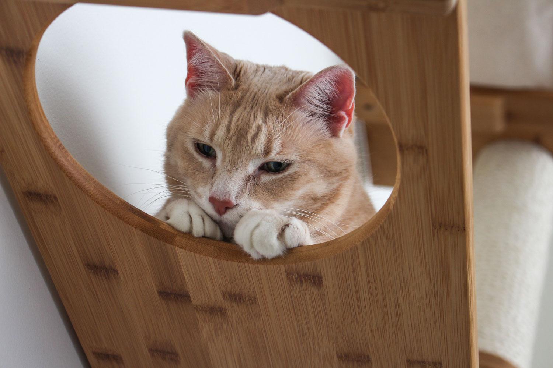 cute cat peeking head through escape hatch of wall mounted cat furniture