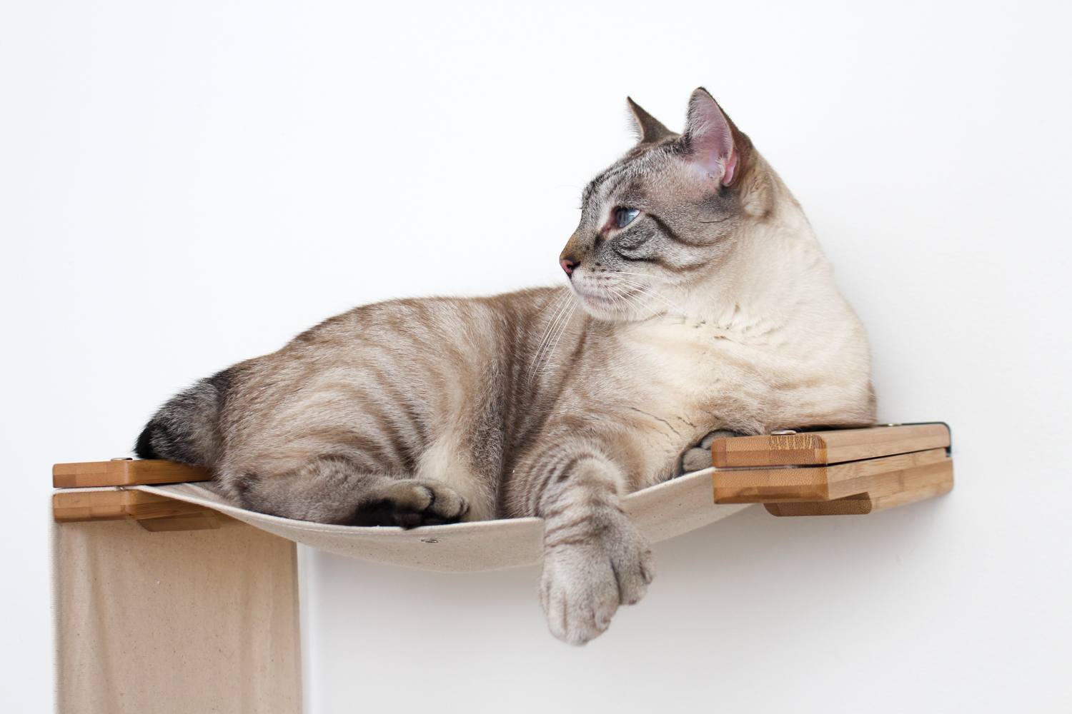 cat lounging on hammock of wall mounted cat furniture