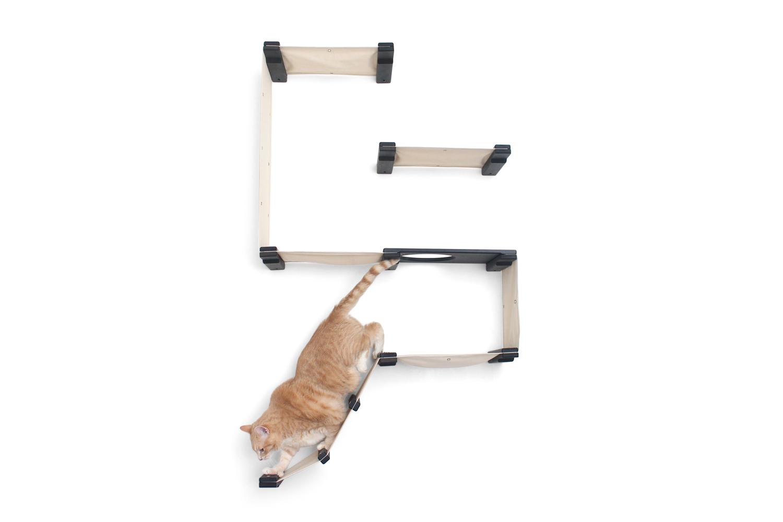 cat exploring wall mounted cat complex