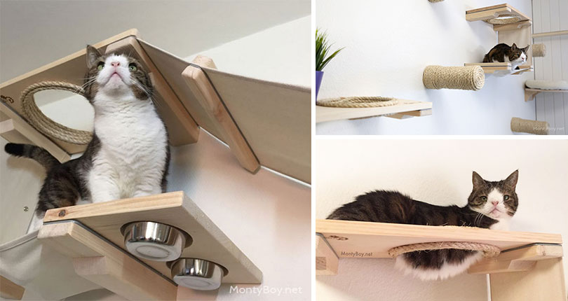 photo collage of cat playing on wall mounted cat furniture