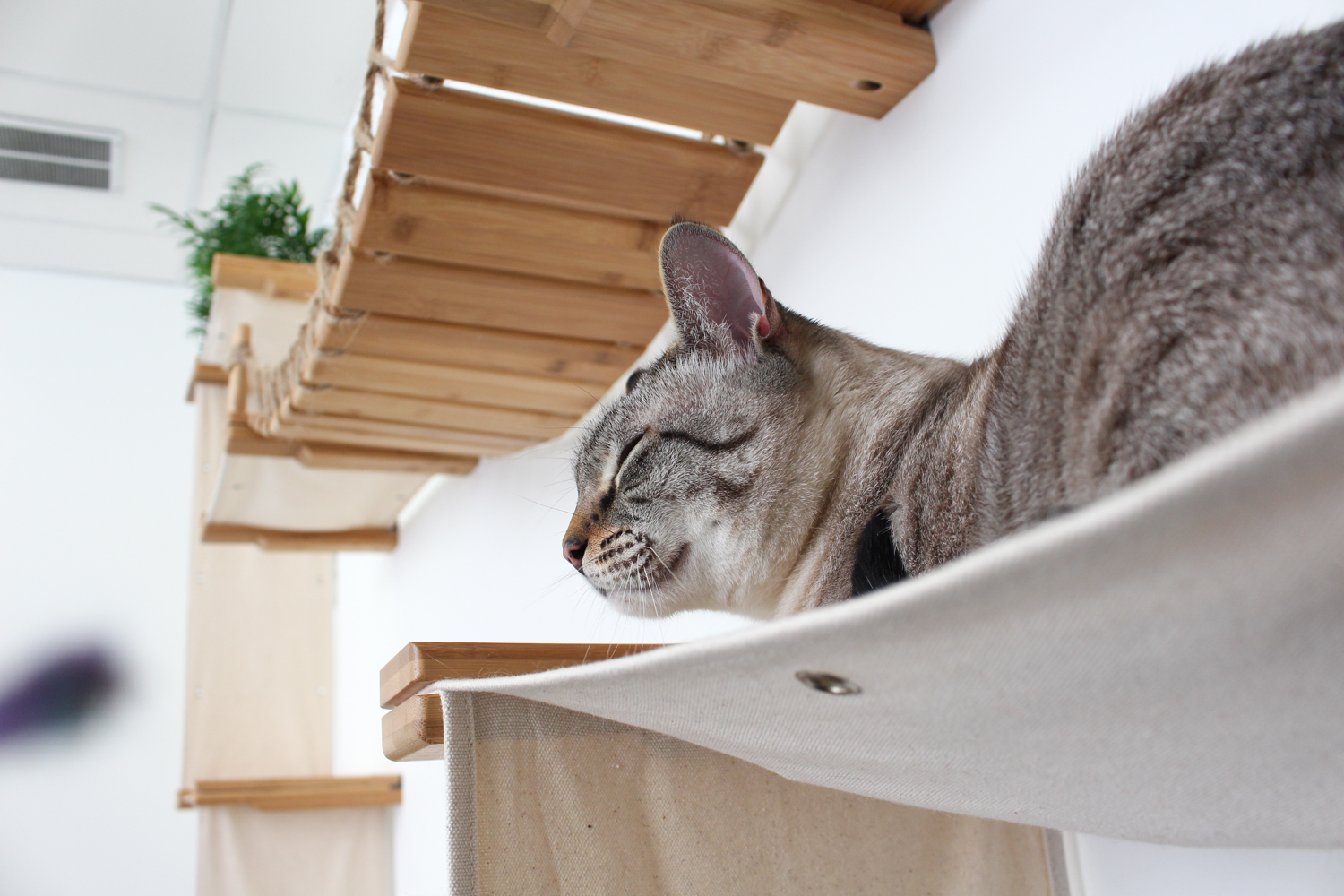cat big chilling on wall mounted cat complex