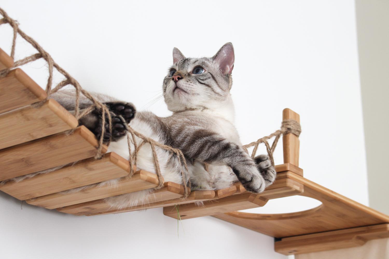 very cute kitten laying on wall mounted cat bridge