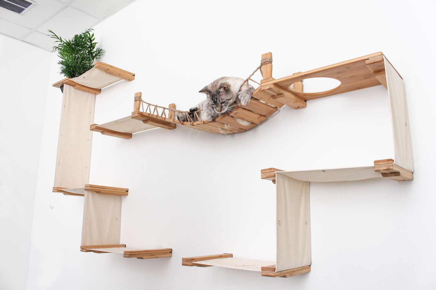 cat laying on wall mounted cat complex