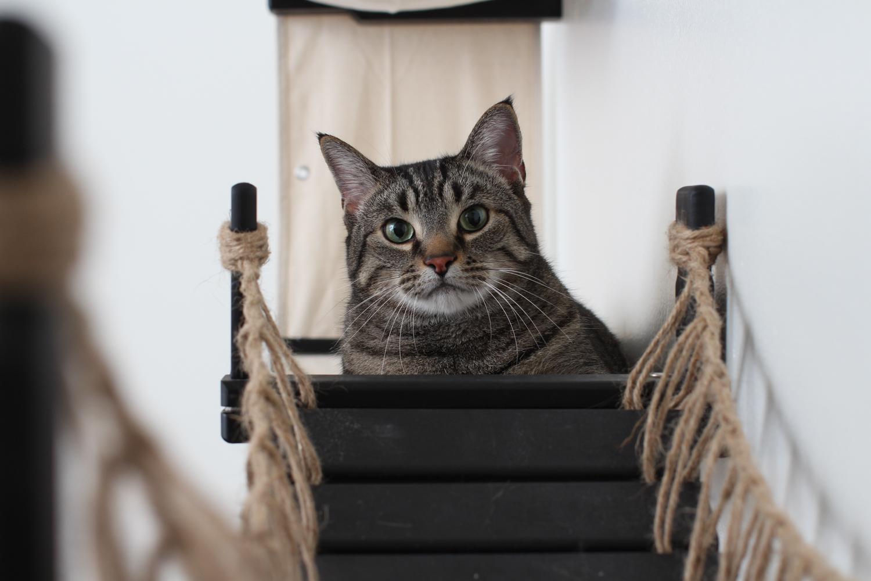 cat sitting on wall mounted cat bridge platform