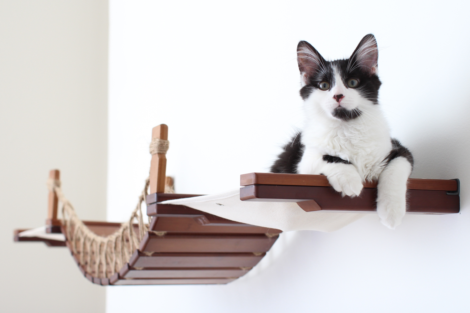 This photo displays a cat on the Bridge Lounge in English Chestnut, a dark brown stain, with Natural fabric, a light tan color.
