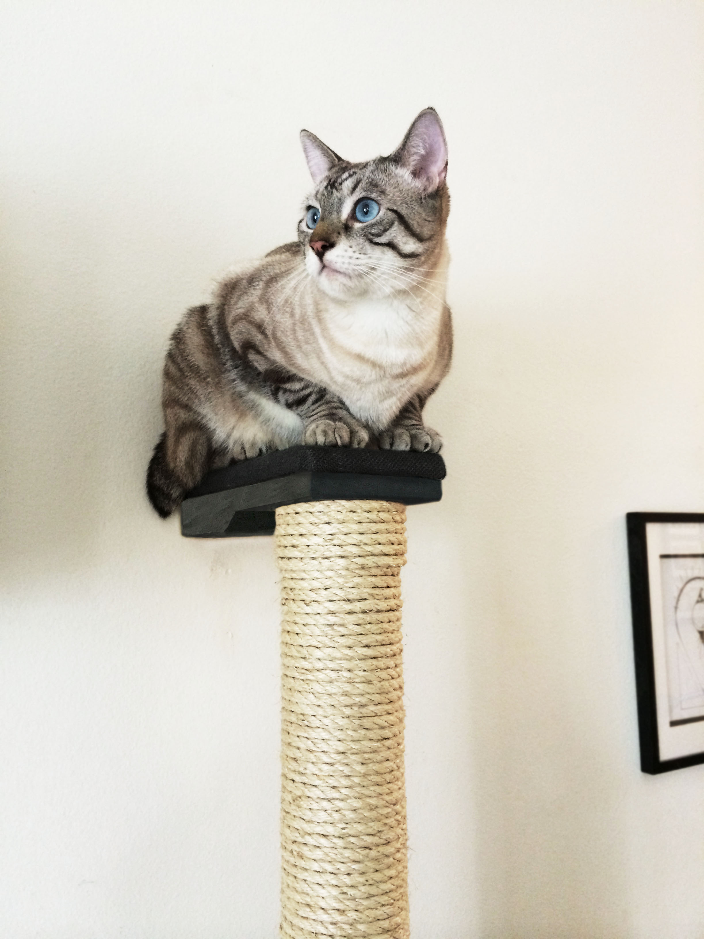 wall mounted cat furniture. Vertical Wall-Mounted Wall Mounted Cat Furniture