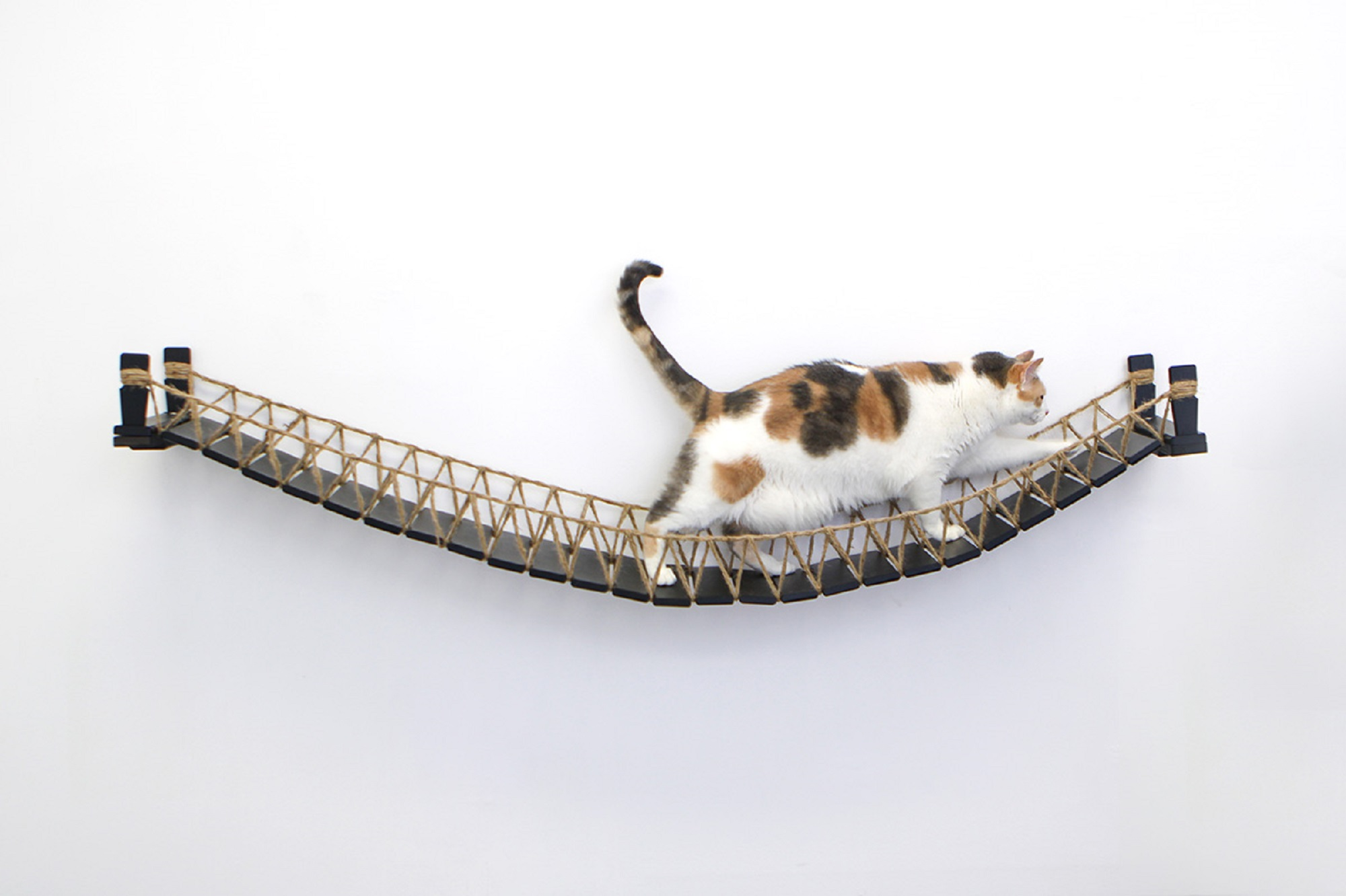 calico cat on 64 inch wall mounted cat bridge