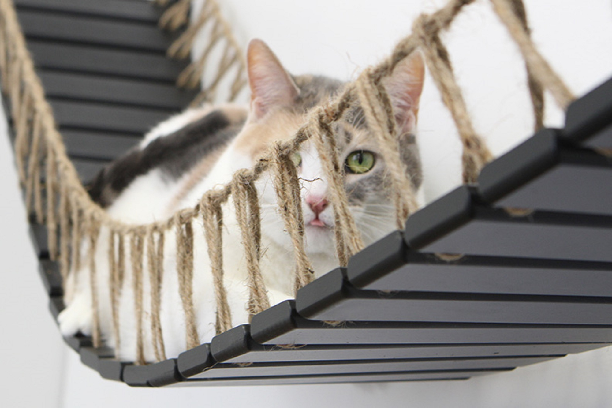 kitten with tongue out peering through rope of wall mounted cat bridge
