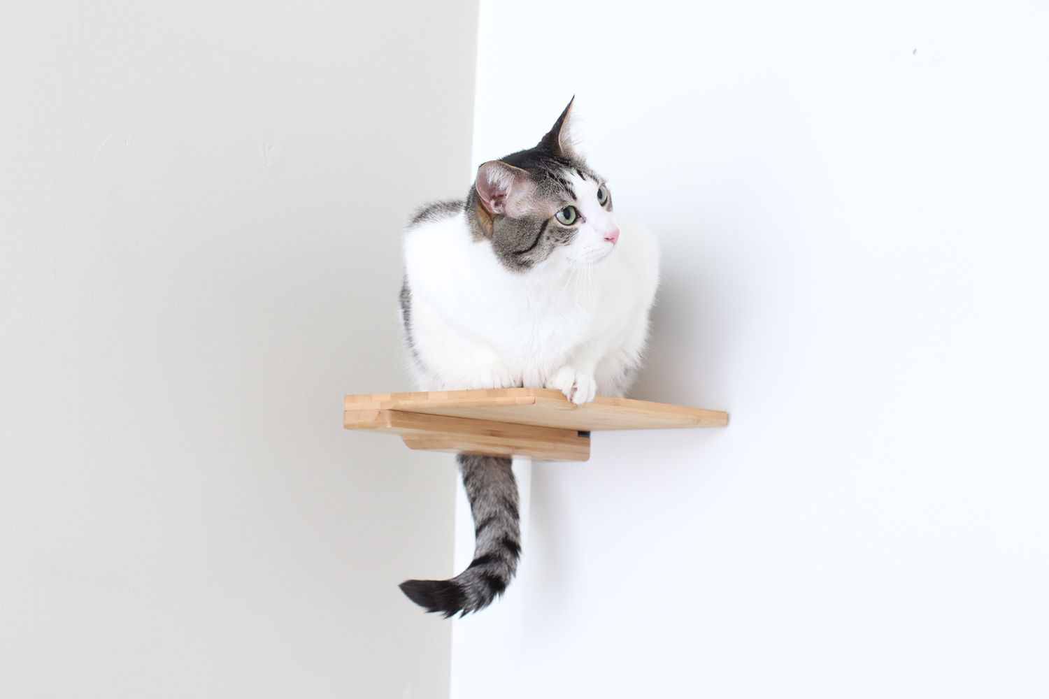 A cat sitting on a Step in Natural, a light brown stain.