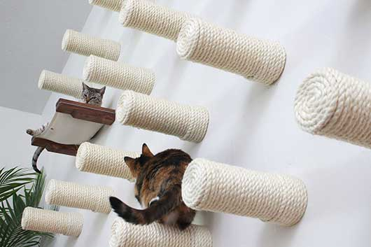 why cat wall installations catastrophic creations