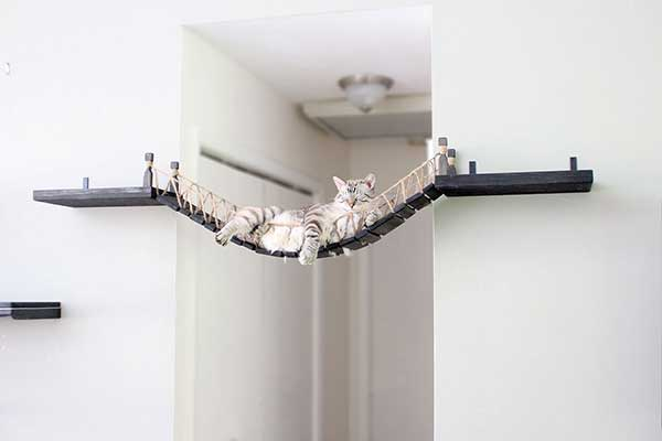Designing Your Cat Wall ⋆ Catastrophic Creations