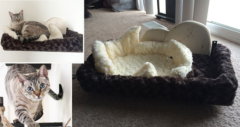 photo collage of dinosaur nest inspired cat bed