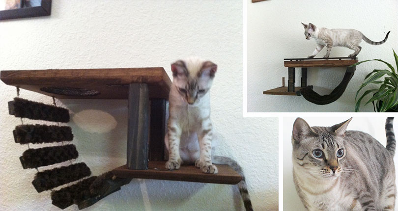 photo collage of kitten on wall mounted cat furniture