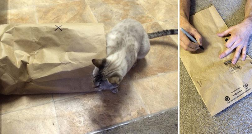 cat next to paper bag