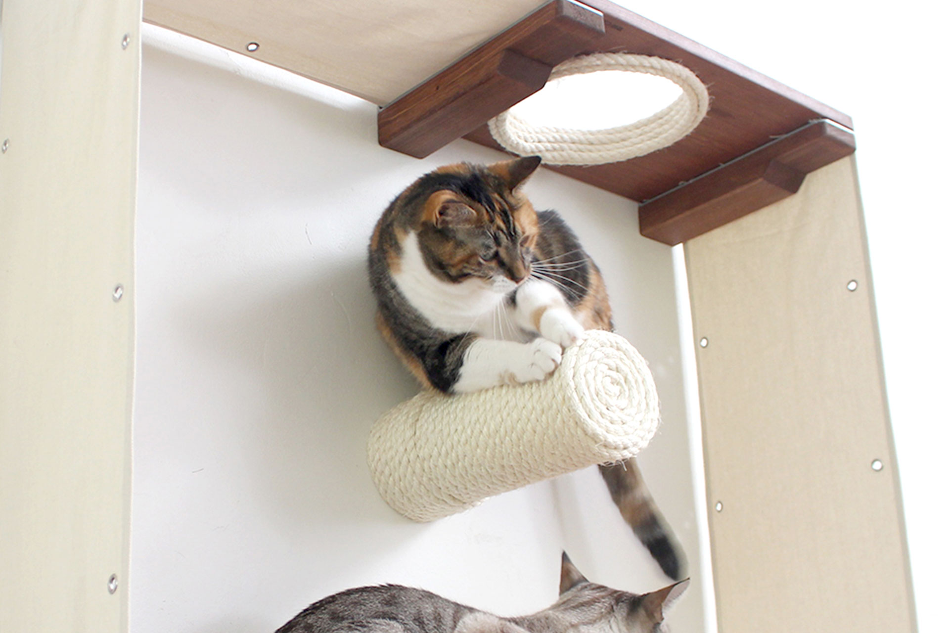 Why Cat Wall Installations? ⋆ Catastrophic Creations
