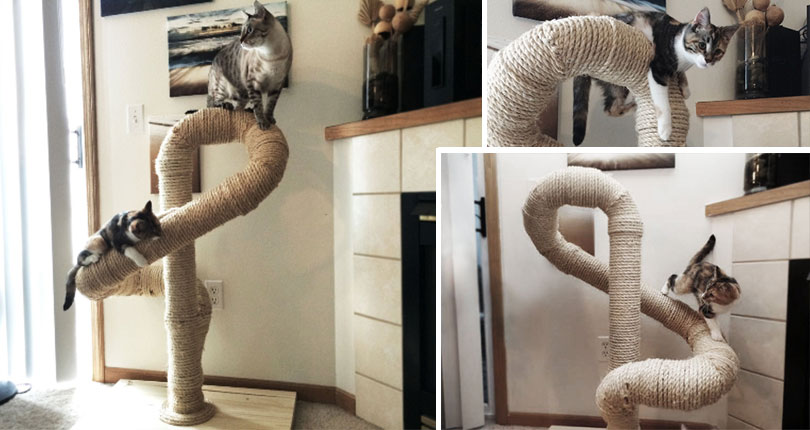 photo collage of cats on winding scratching cat post