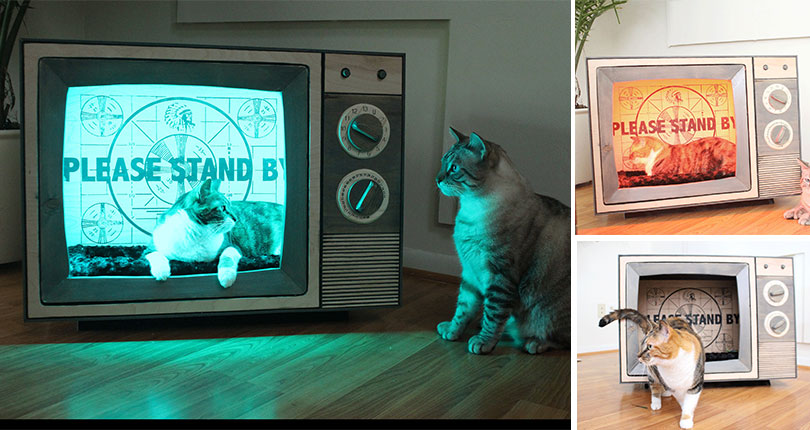 photo collage of cats sitting in vintage tv cat bed