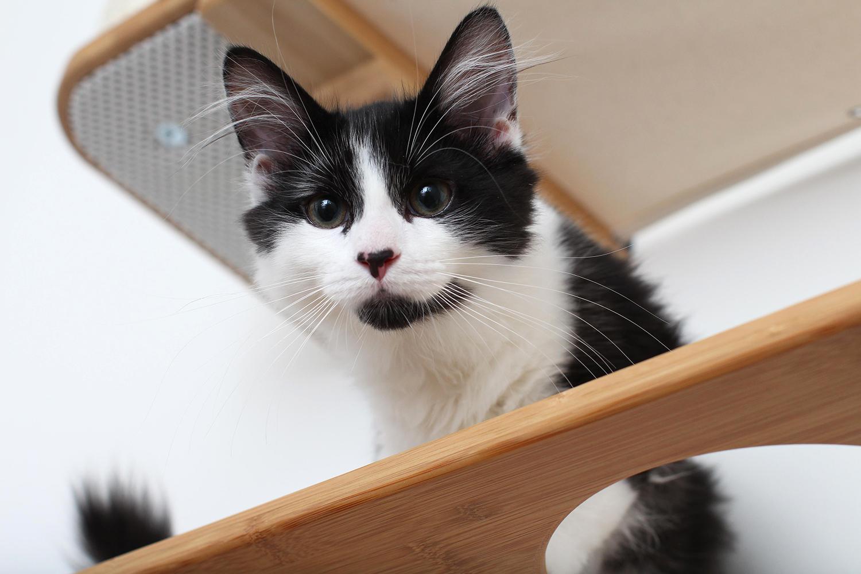 cute kitten exploring wall mounted cat furniture