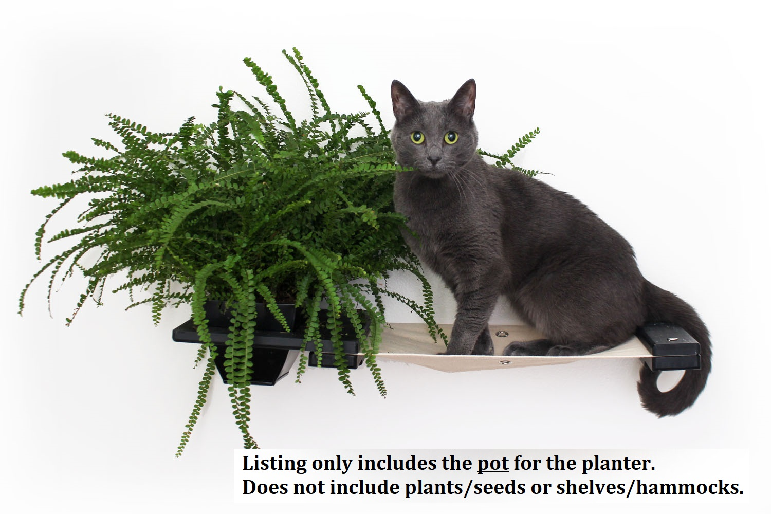 This photo displays one cat on the Planter Lounge. This Planter Lounge is in Onyx, a black stain, and has Natural fabric, a light tan color. This listing only includes the pot for the planter.