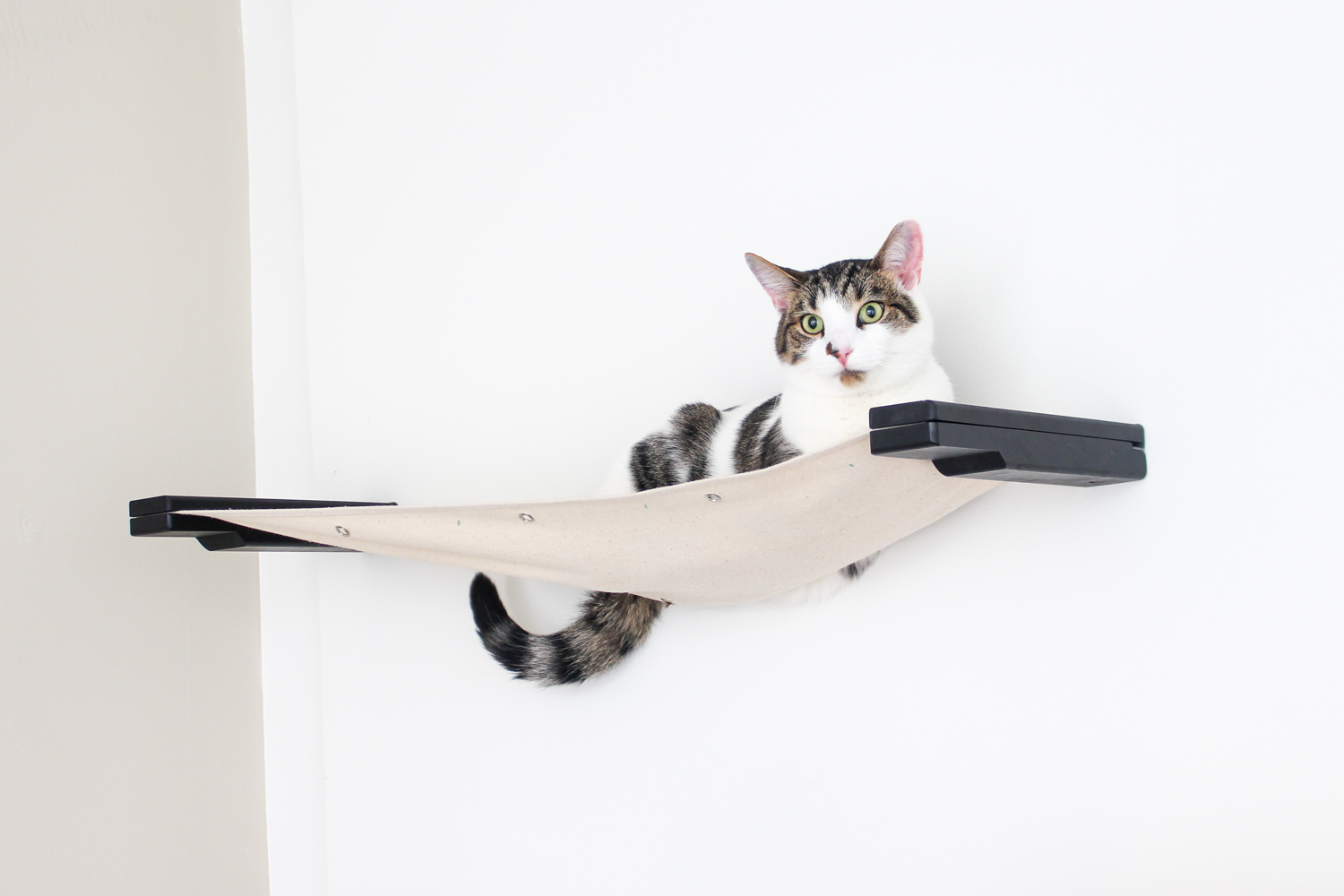 cat laying in wall mounted cat hammock