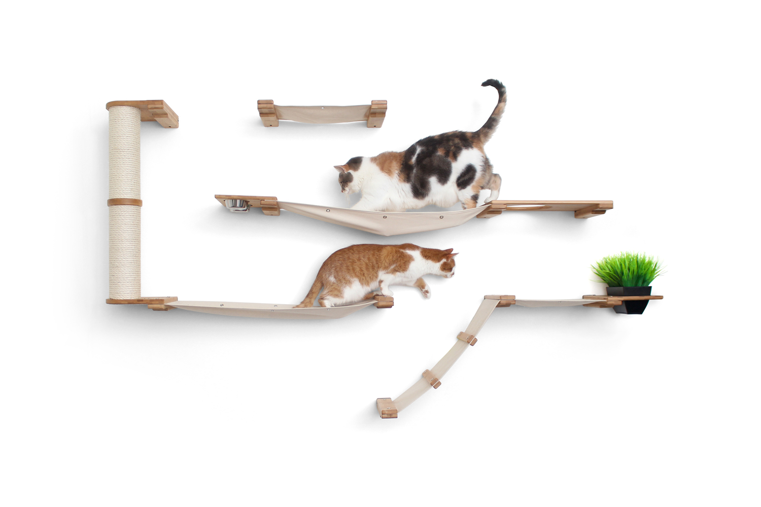 two cats exploring on wall mounted cat complex