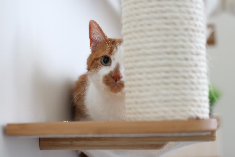 cat half hidden behind wall mounted scratching post