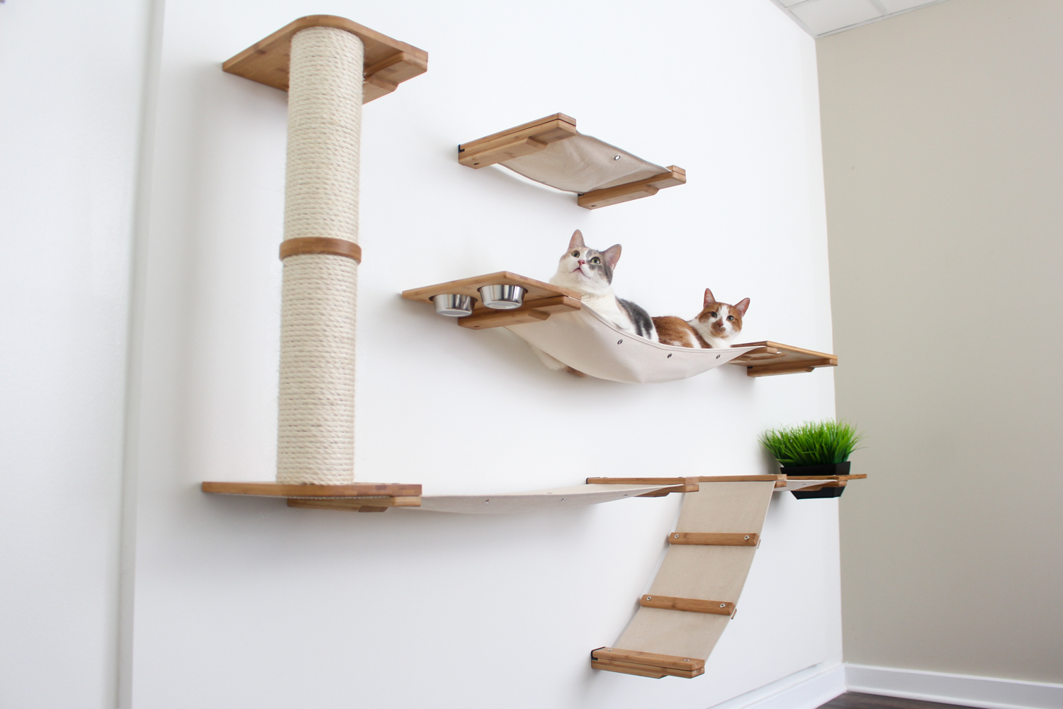 two cats lounging together on wall mounted cat complex