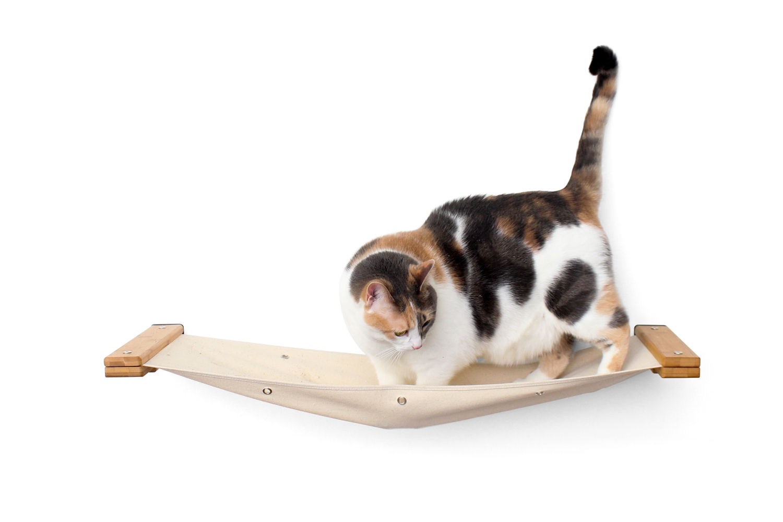 cat sitting in wall mounted cat hammock