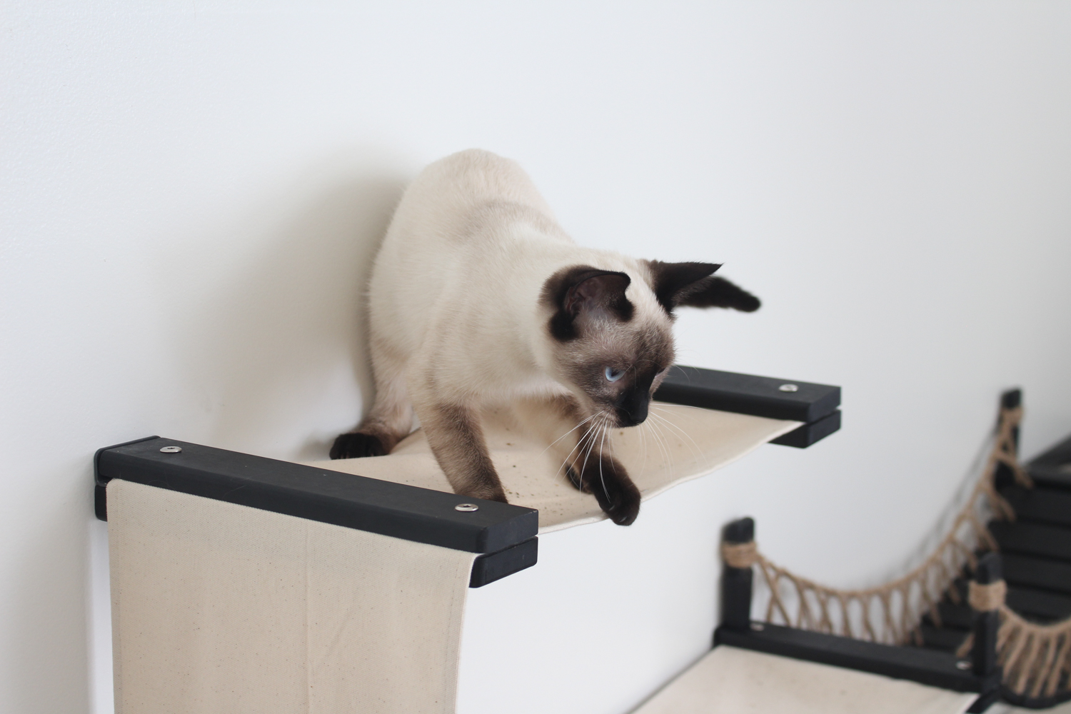 This photo displays a cat playing on the Canyon Cat Condo.
