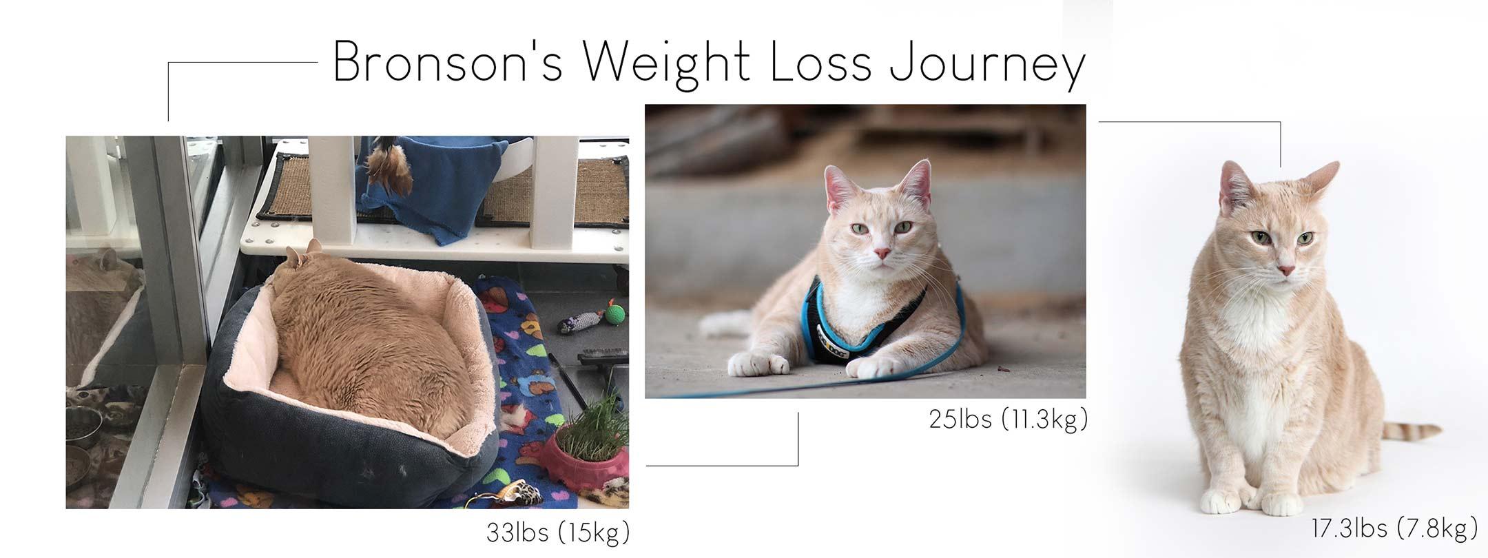 progress photos of bronson's weight loss