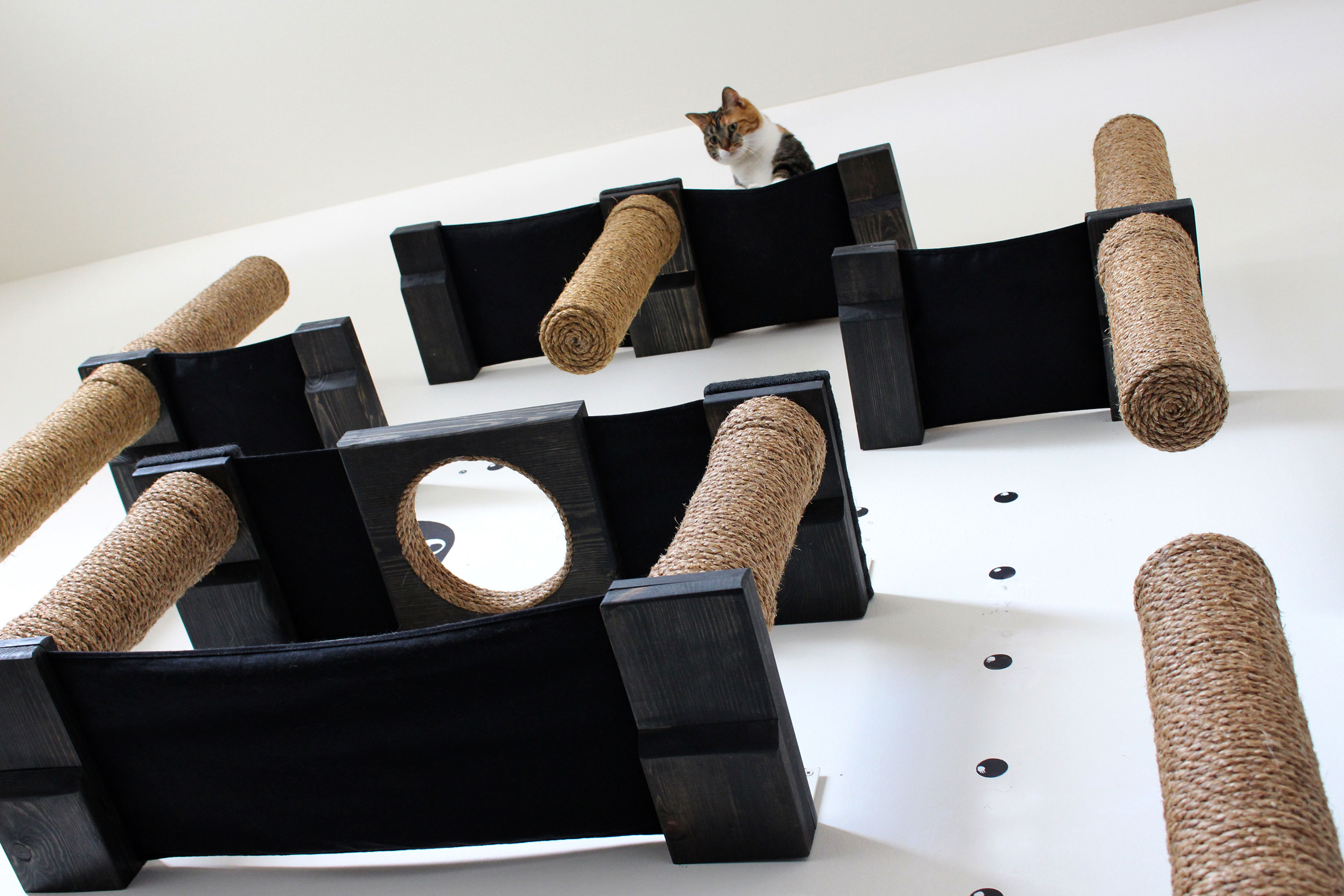 under shot of wall mounted cat complex with cat perched atop it