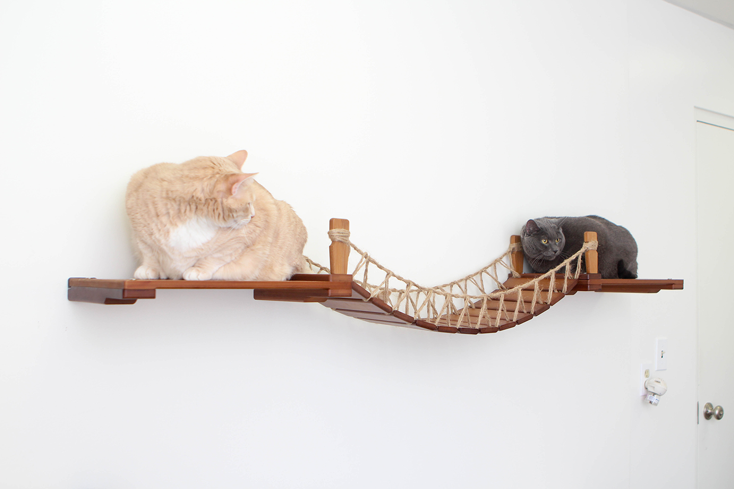 This photo displays two cats on the shelves of the Bridge with Landings. This Bridge is in English Chestnut, a dark brown stain.