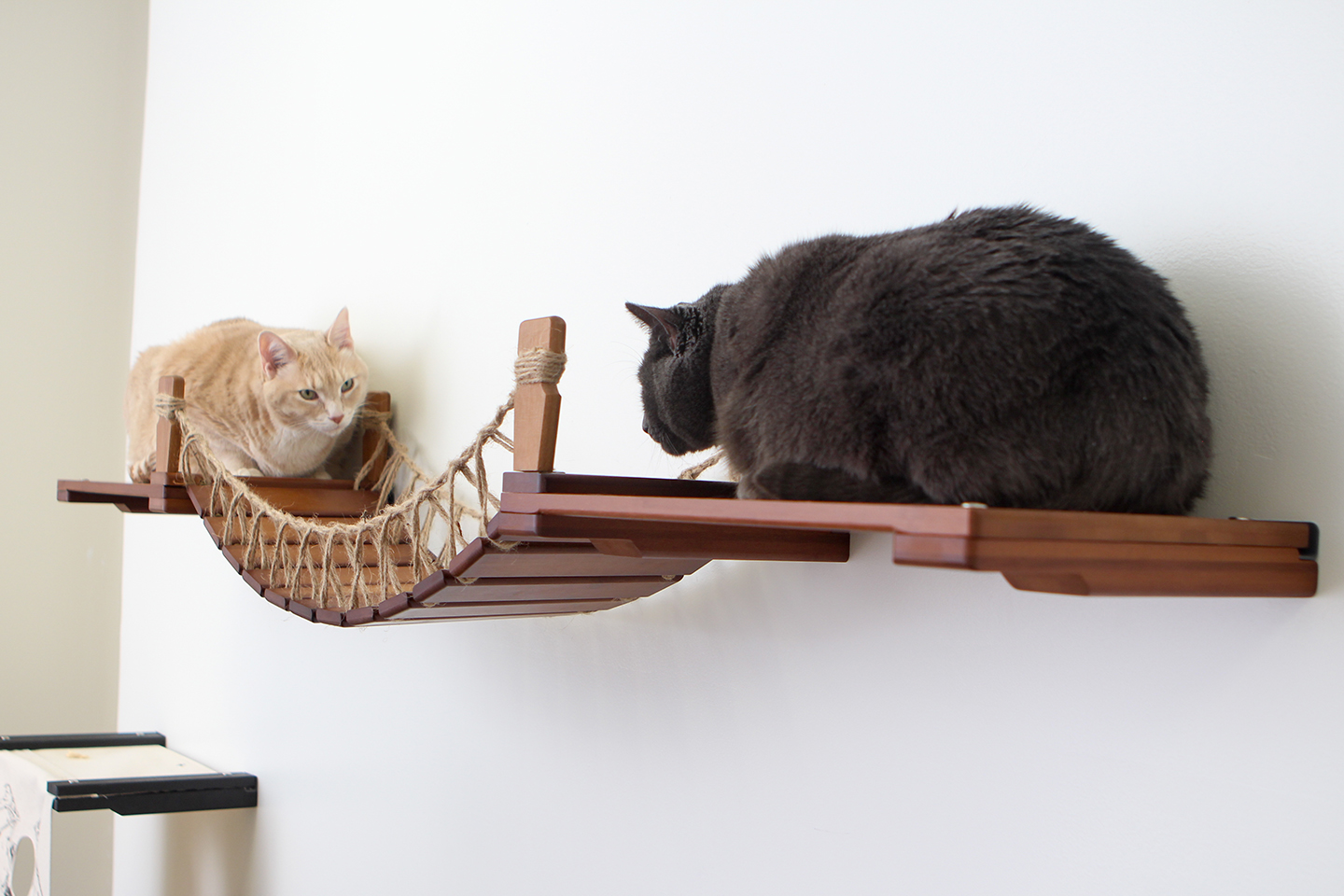 This photo displays two cats staring at one another from each shelf of the Bridge with Landings. This Bridge is in English Chestnut, a dark brown stain.