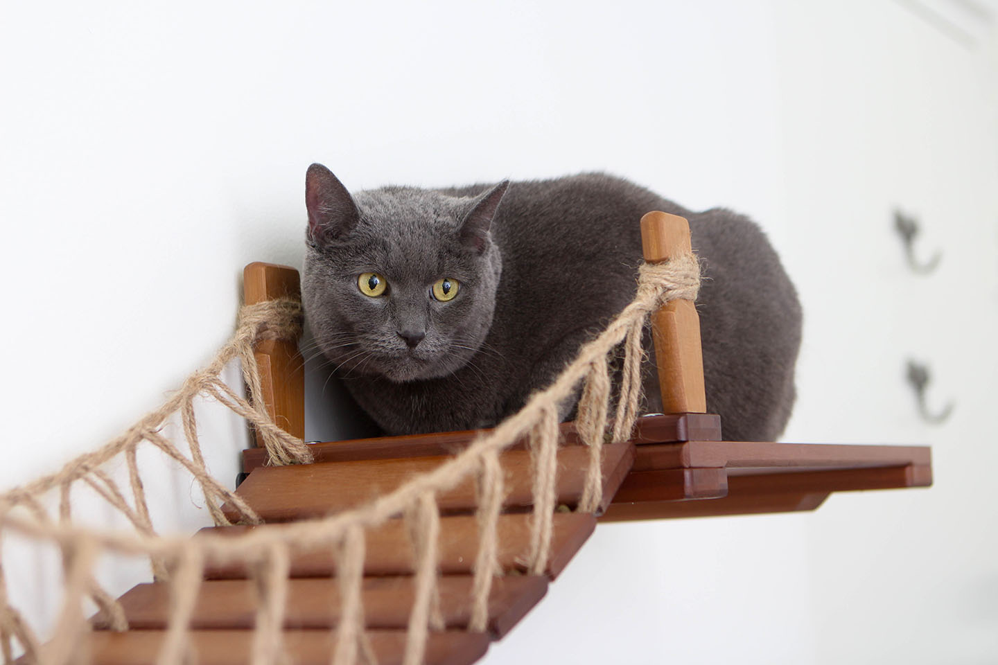 This photo displays a cat on one of the shelves of the Bridge with Landings. This Bridge is in English Chestnut, a dark brown stain.
