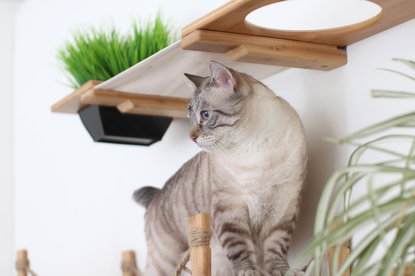 This photo displays a close up of one of our cats on The Juggernaut. This complex is in Natural, a light brown stain, and has Natural fabric, a light tan color.