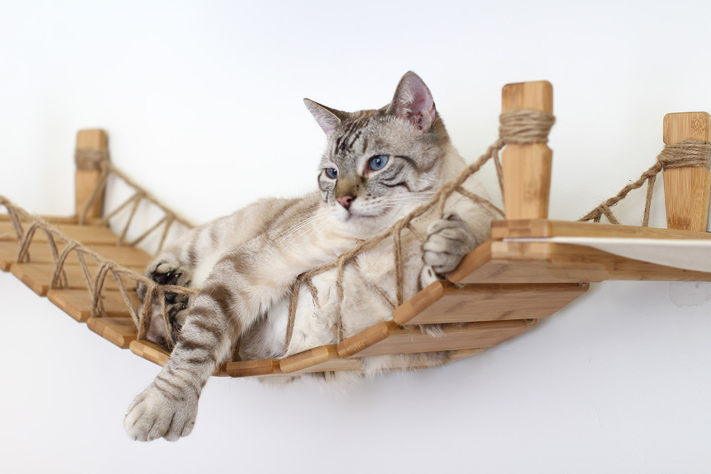 This photo displays our cat lounging on the Bridge that is a part of The Juggernaut complex. This Bridge is in Natural, a light brown stain.