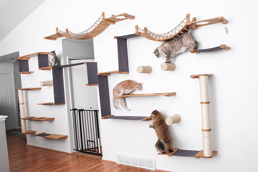 This photo displays all of our cats on our own personal cat wall. This includes several Hammocks, Sisal Posts, Sisal Poles, Escape Hatches, and two Bridges.