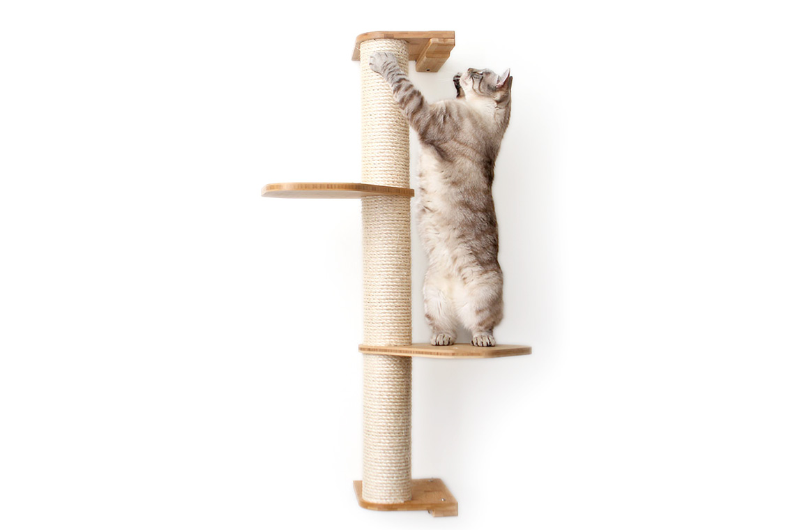 fluffy cat playing on wall mounted sisal pole